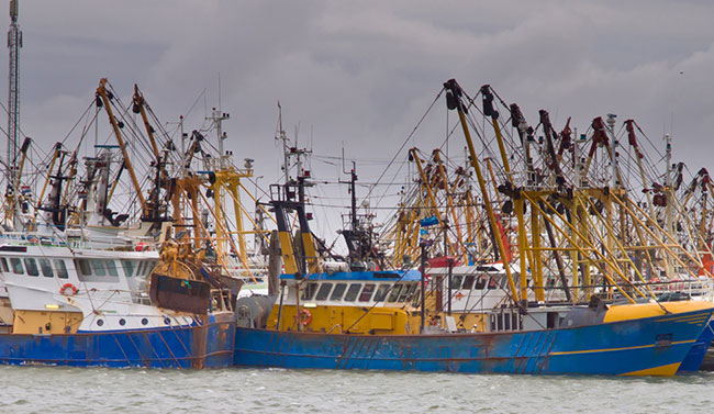 How Blockchain Development Can Impact the Fishing Industry